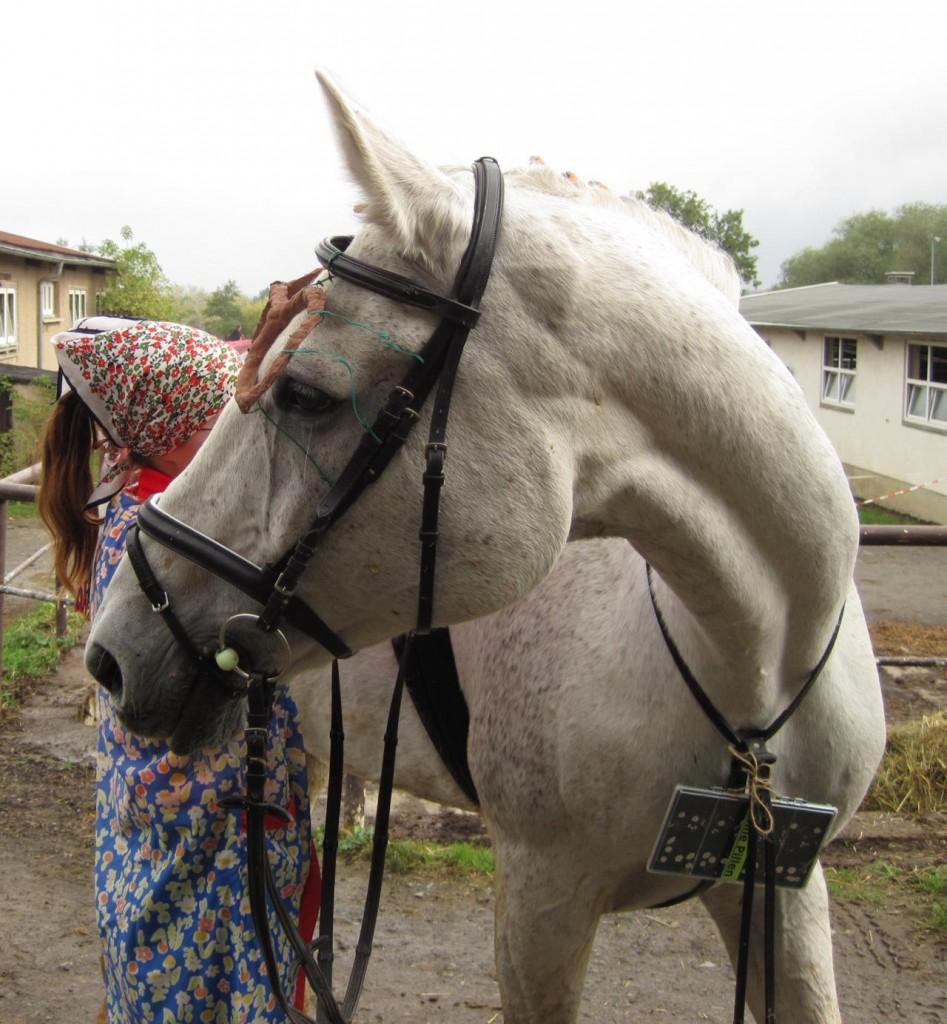 Kürpferd Paladin und Reitern Madeleine